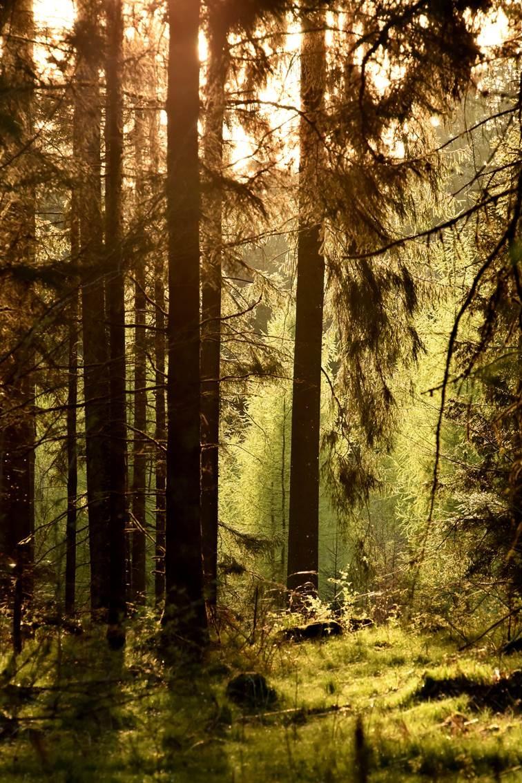 Niederlenz Forest